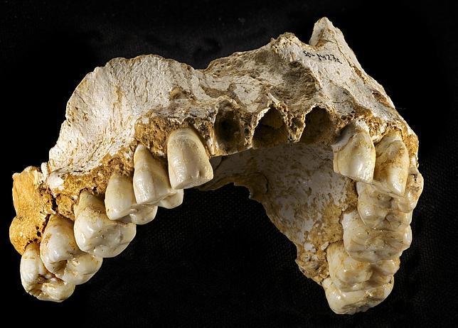 dientes de un neandertal